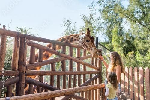 jeunes filles donnant à manger aux girafes Poster
