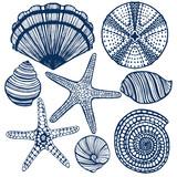 vector hand-drawn maritime set - shells urchin starfishes