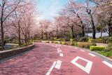 TOKYO MIDTOWN, JAPAN - APRIL 1ST: Spring sakura cherry blossoms