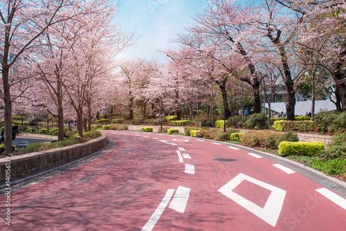 TOKYO MIDTOWN, JAPAN - APRIL 1ST: Spring sakura cherry blossoms Poster