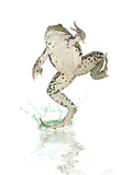 frog running