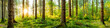 Idyllisches Wald Panorama bei Sonnenaufgang