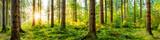 Idyllisches Wald Panorama bei Sonnenaufgang - 140213764
