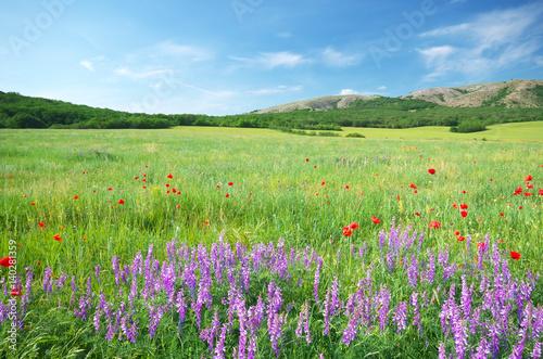Green meadow in mountain.