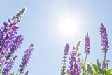 Wildflowers against sunny blue sky - 140287929