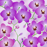 Vector illustration. Branch of beautiful pinkand purple  Phalaenopsis orchids for decoration backgrounds.