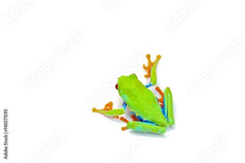 Aluminium Kikker macro frog isolated on white background