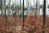 las wczesną wiosną