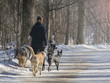 A woman walks four of her dogs