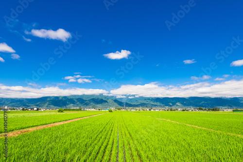 Keuken foto achterwand Lime groen 信州 安曇野の田園風景