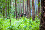 Hut in the green woods