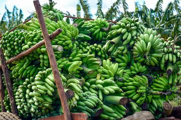 Banane, Bananen, Staude