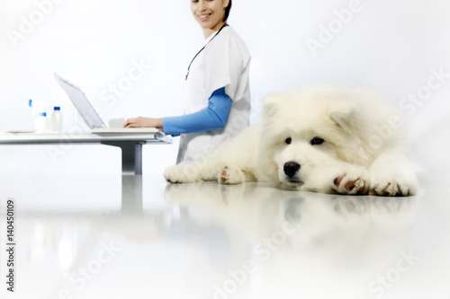 smiling Veterinarian examining dog on table with computer in vet clinic