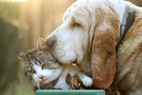Dog and cat love - 140452197