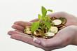 Geld und Pflanze. Symbolfoto Sparen - 140452946