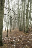 Mist in wood