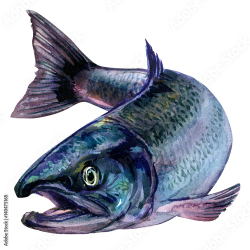 Whole fresh atlantic salmon fish isolated, watercolor illustration on white - 140475168