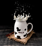 Splash of milk from the milk glass with cow camouflage on dark background
