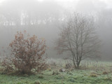 Autumn misty morning amidst Dixie woods/Calderdale collection
