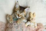 Sleeping kitten wrap...