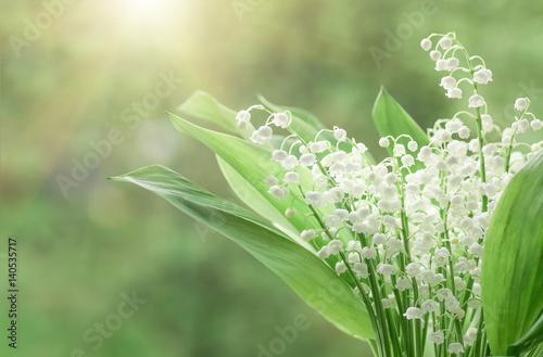 Plexiglas Lelietjes van dalen Flower lily of the valley, closeup, spring