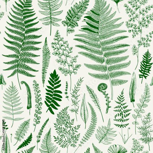 Seamless pattern. Ferns. Vintage vector botanical illustration. Green - 140537381