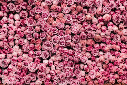 flowers wall background with amazing roses - 140571112