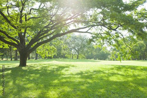 公園の木陰