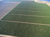 Aerial top view on extensive vineyards