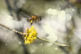 ...endlich Frühling...Arbeitsbiene