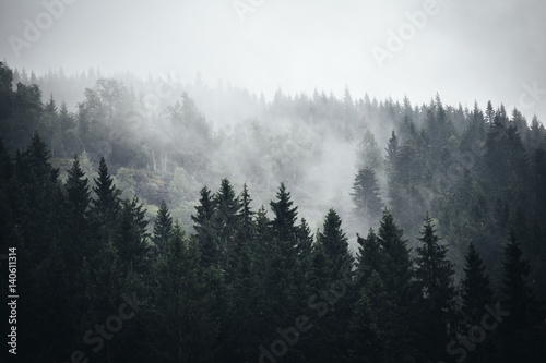 Mgła w norweskim lesie
