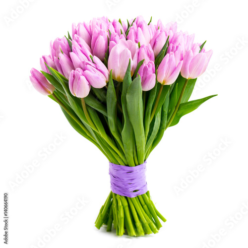 violet tulips isolated on white Poster