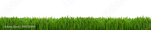 Fototapeta Gras Textur als Hintergrund Panorama