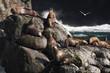 Steller sea lions resting on rocks in Alaska