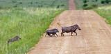 Family warthogs on the Masai Mara - Kenya - 140707566
