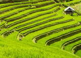 Farm hut surrounded by terraced rice fields, Mu Cang Chai, Northern Vietnam
