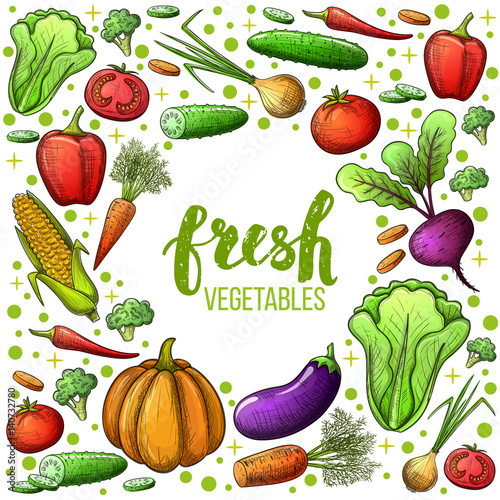 Colorful sketch style set of vegetables icons. Eco organic fresh template with vegetables for the decoration of menu. Vector.