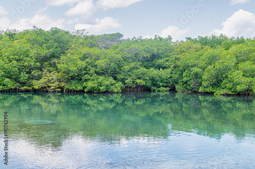 Poster River with Mangroves, Cuba