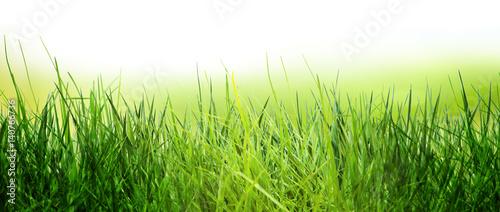 wiosna łąka