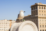 Gull on the historical center of Rome