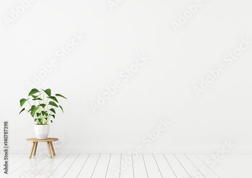 Empty white interior with plant in pot on wooden stool. 3d rendering.