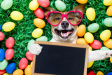 easter bunny dog with eggs selfie