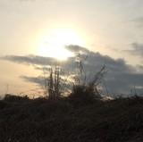 Naturlandschaft mit tief stehender Sonne
