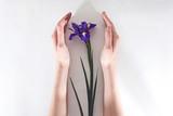 Spring iris flower