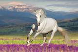 White horse on flower field against mountain view