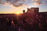 Campo di Lavanda al tramonto con rovine di un vecchia fortezza sullo sfondo