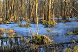 spring flooded deep forest