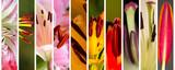 Macro stamens of blooming lilies - 140873160