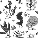 Seaweed. Seamless vector pattern with underwater plants. Black and white vector illustration. - 140878755