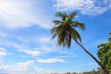 Palm tree and blue sky minimal travel banner template. Cloudy blue sky with coco palm tree silhouette